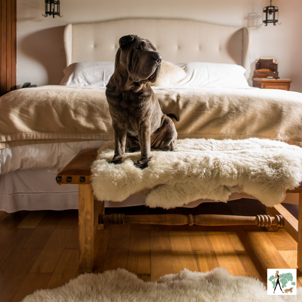 cachorro sentado em cima de pelego em banco no quarto de hotel