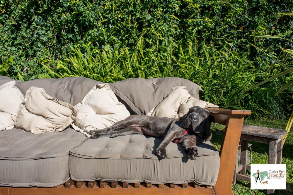 cachorro deitado em sofá com almofadas