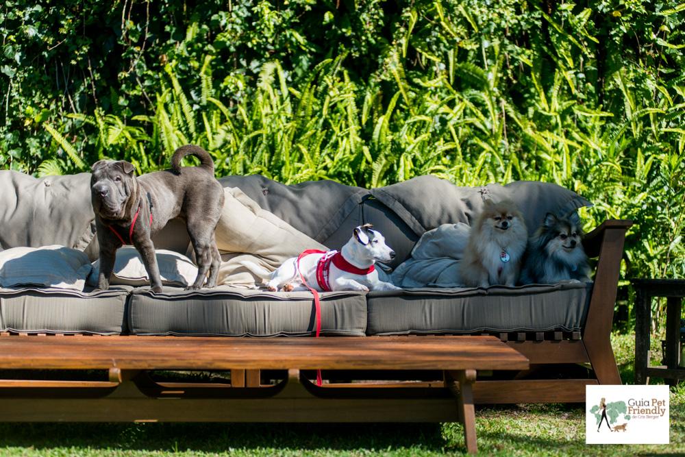 cachorros deitados em cima de sofá