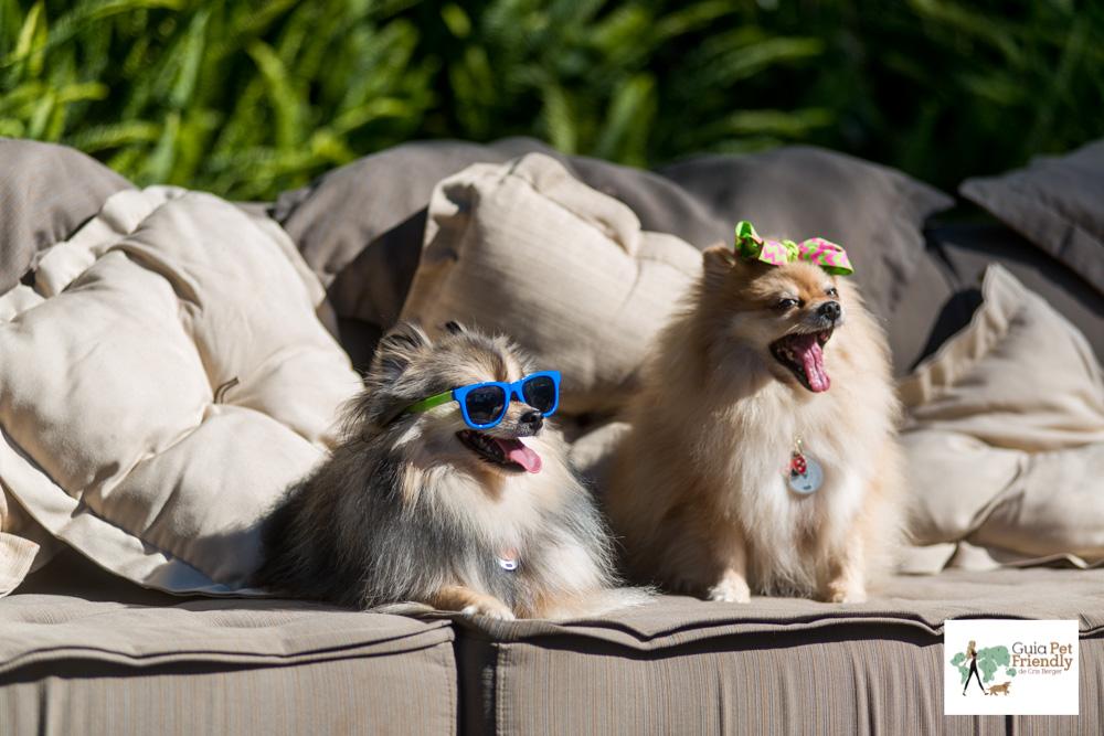 cachorros de óculos em cima de sofá