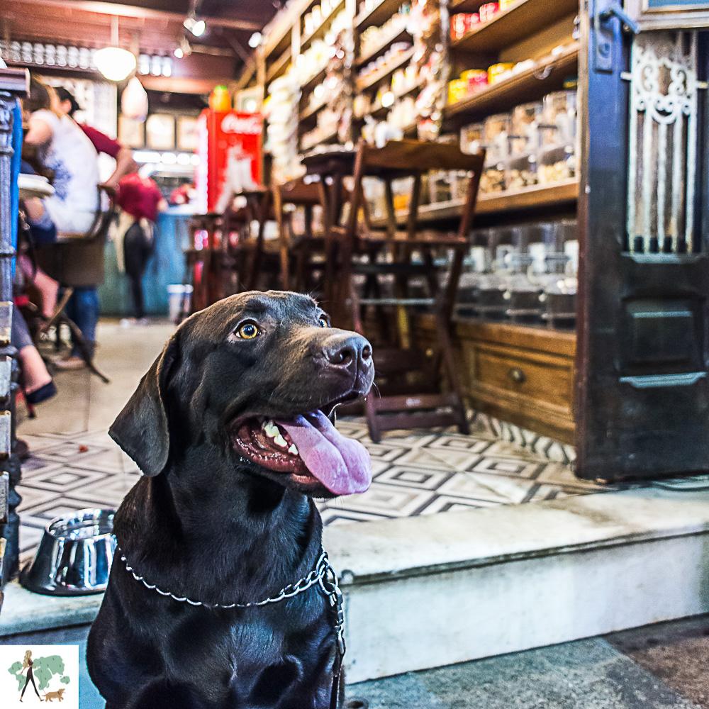 cachorro sentado em frente ao bar