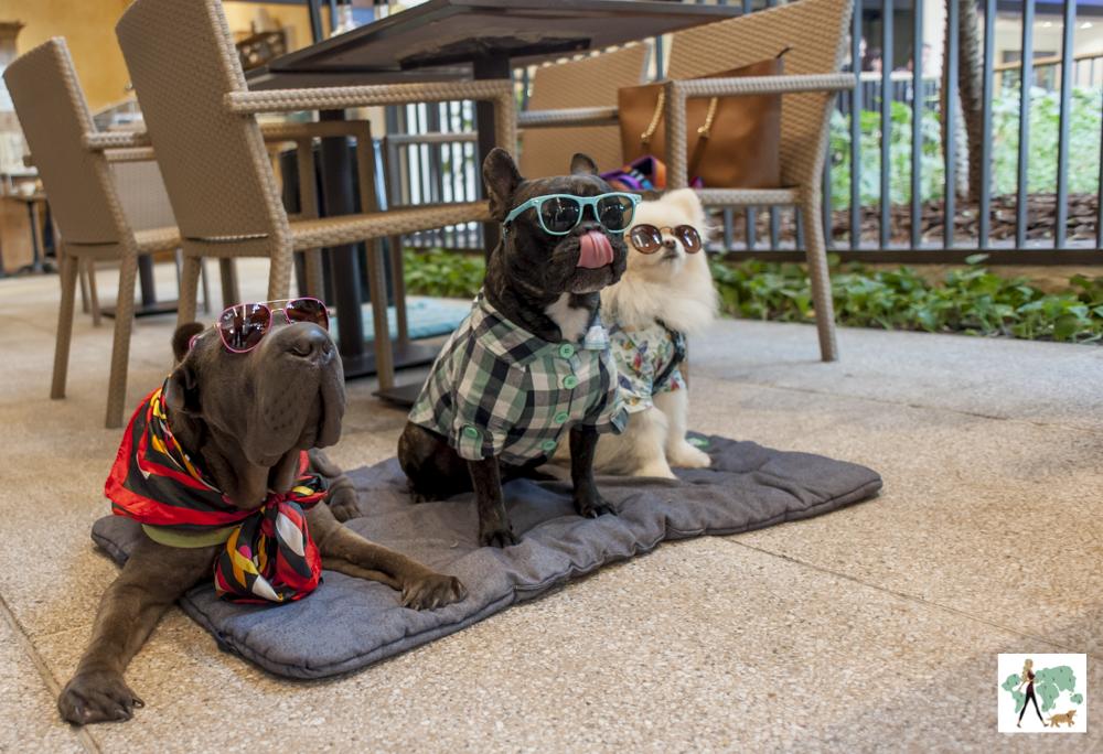 cachorros de óculos posando em cima da almofada ao lado de mesa de restaurante