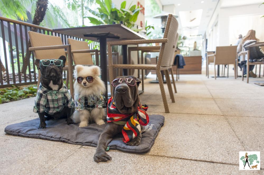 três cachorros de óculos posando em cima da almofada no shopping
