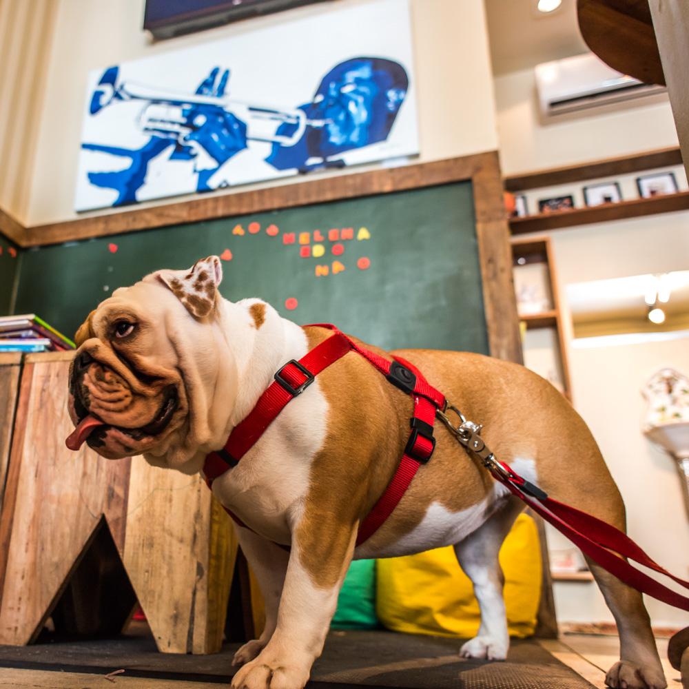 cachorro em pé dentro de loja de doces