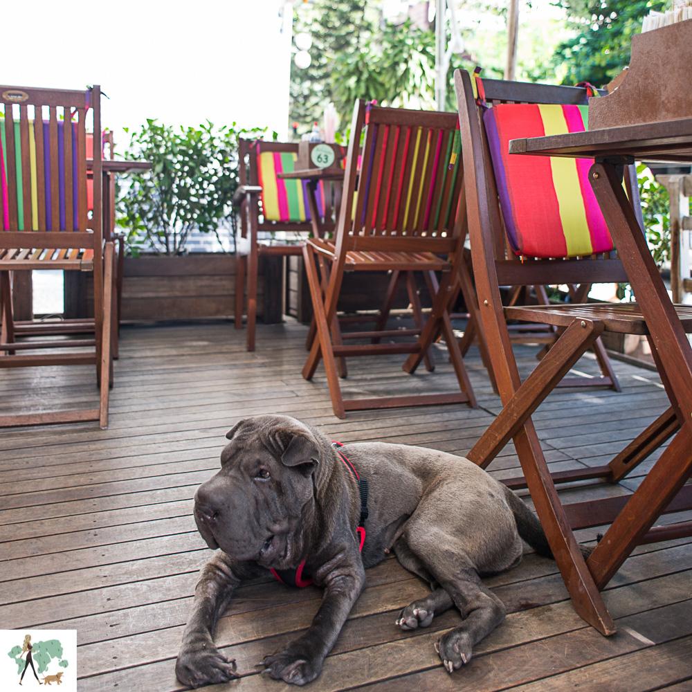 cachorro em deque de restaurante