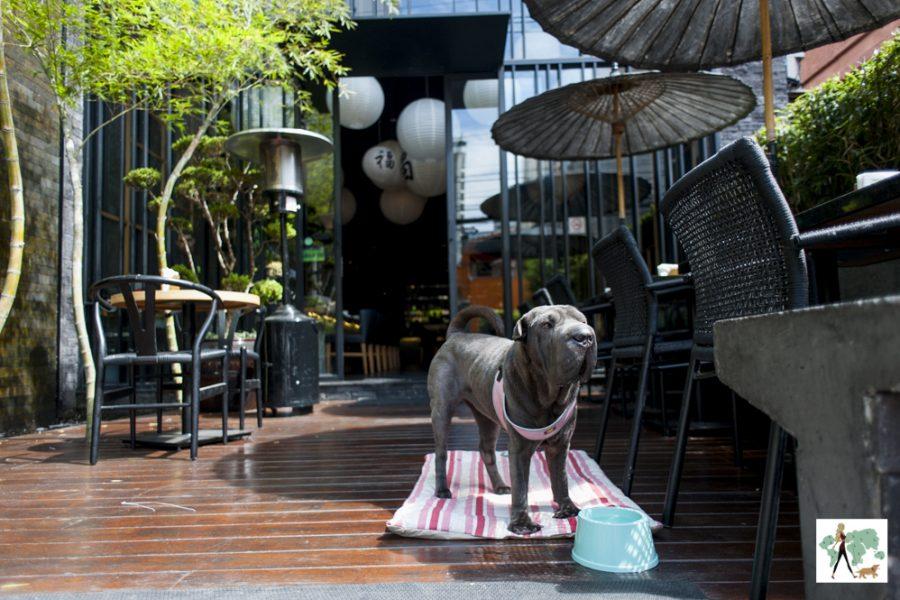 cachorro em pé na frente de mesas e cadeiras