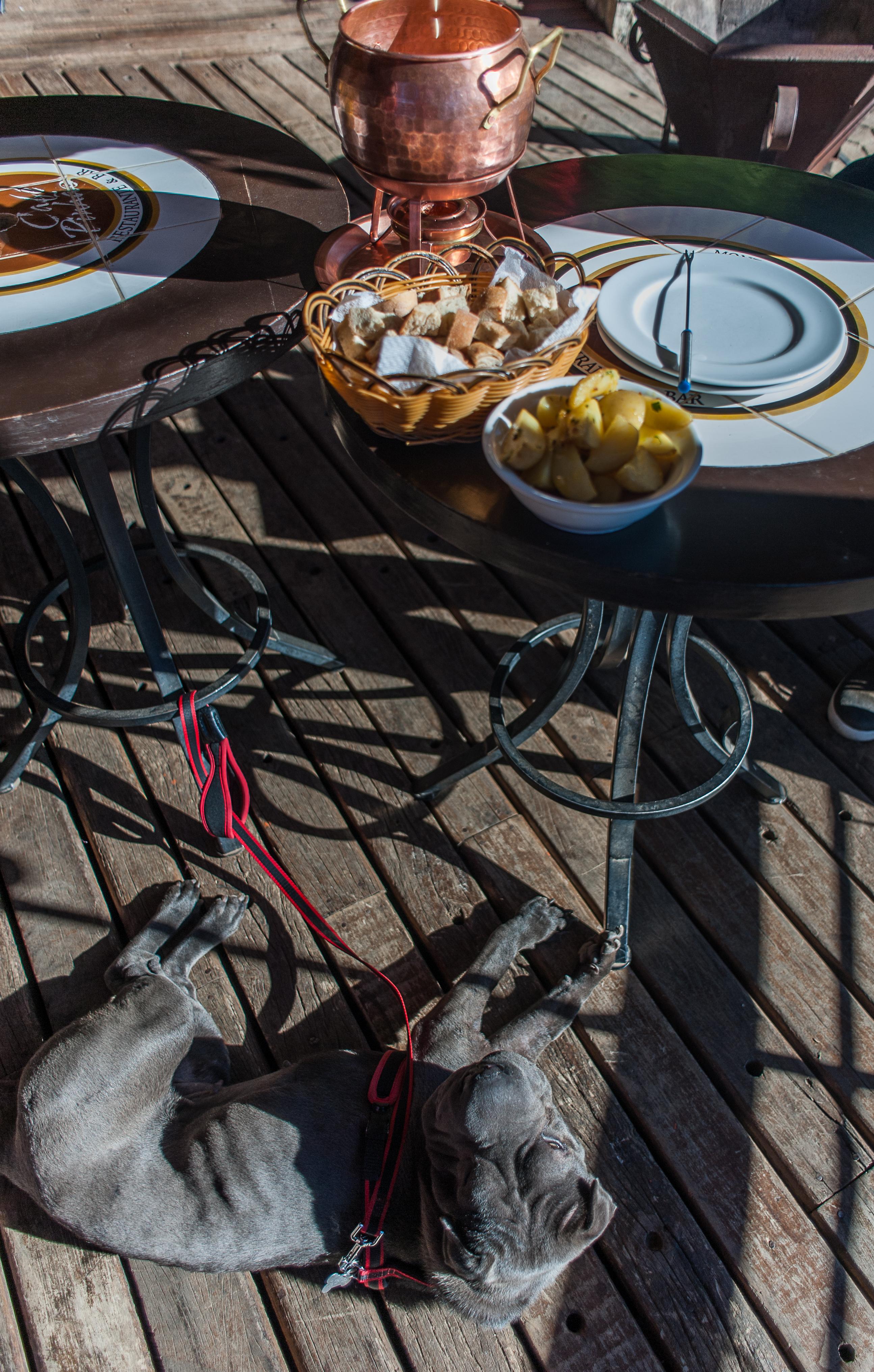 cachorro deitado e fondue em cima da mesa