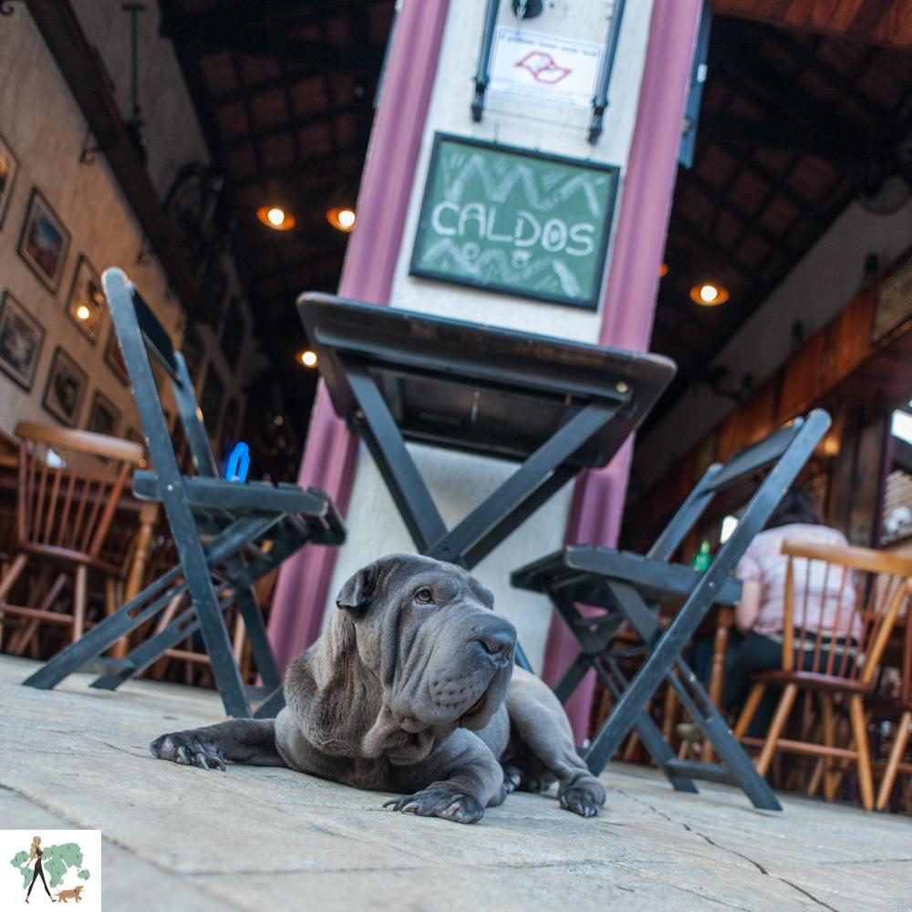 cachorro na calçada de bar