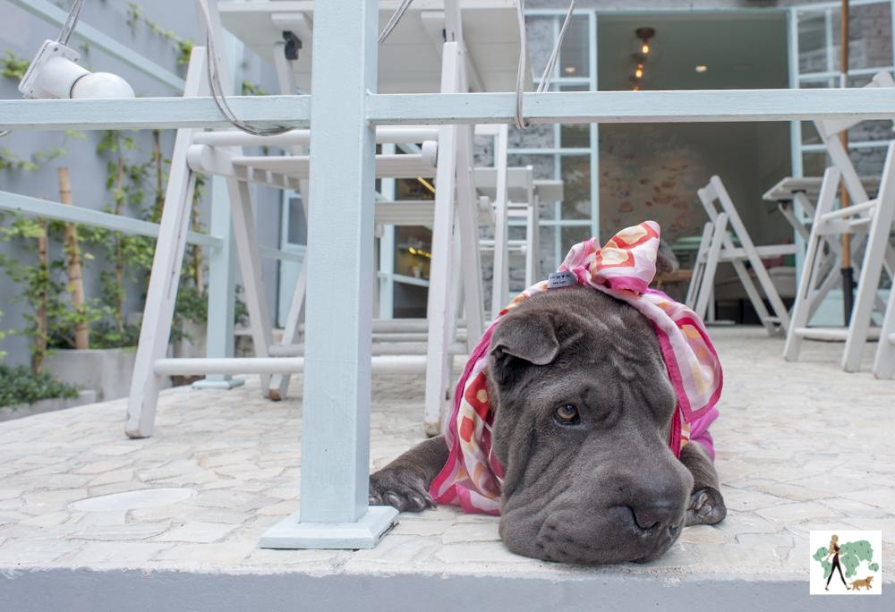 cachorro deitado com lenço rosa em deque