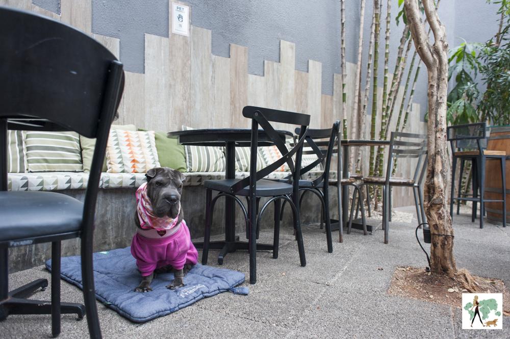 cachorro de moleton rosa em varanda de restaurante