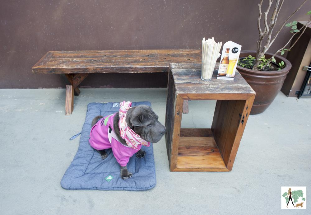 cachorro sentado em cima de almofada ao lado de caixote