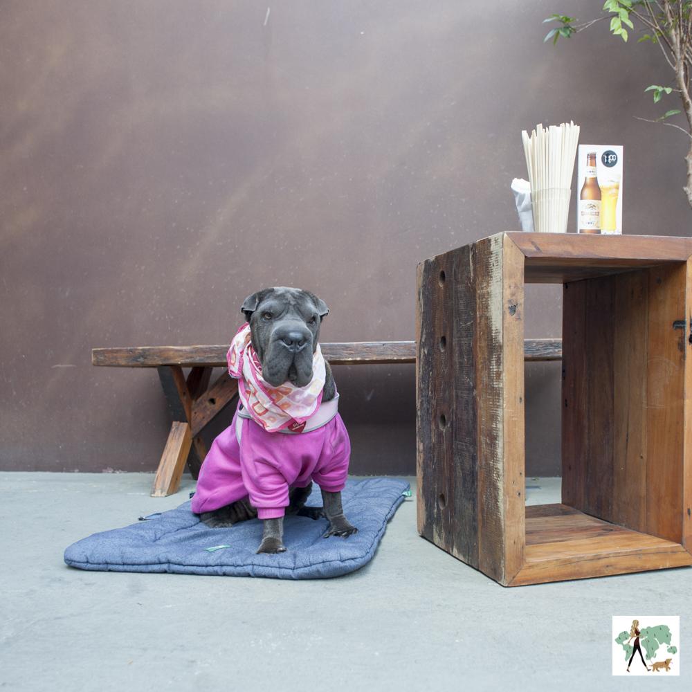 cachorro de moleton rosa em cima de almofada na frente de bar