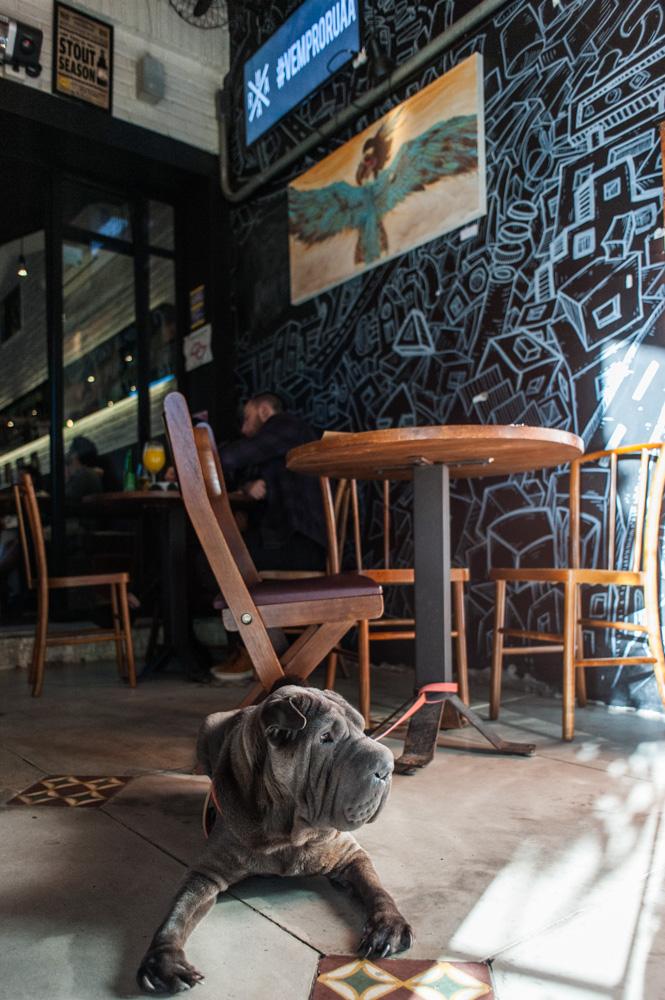 cachorro sentado em restaurante