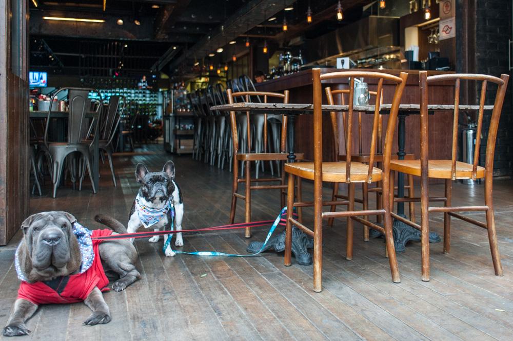 cachorros em deque de bar