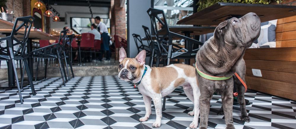 cachorros na varanda de restaurante