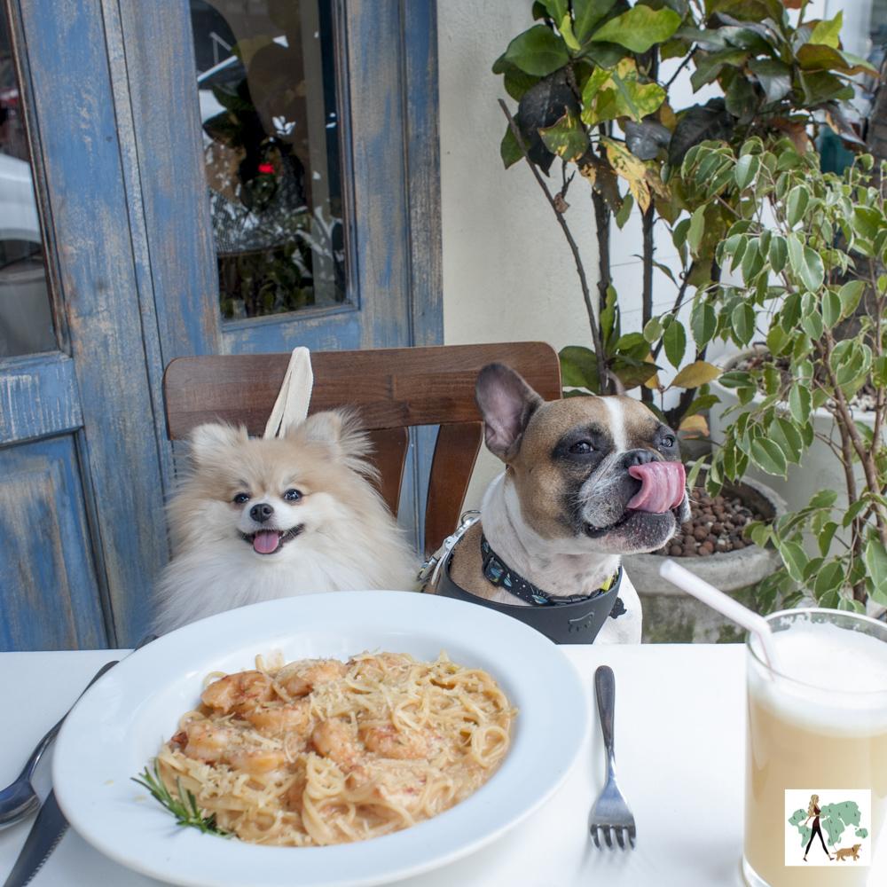 cachorros sentados na cadeira e prato de massa na mesa