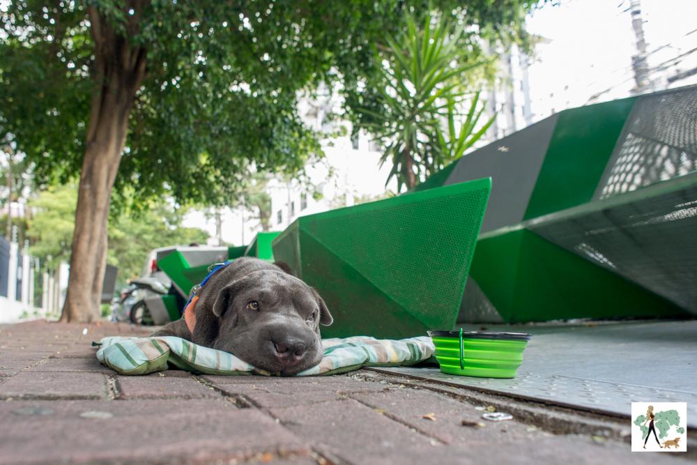 cachorro deitado na calçada da rua ao lado de parklet
