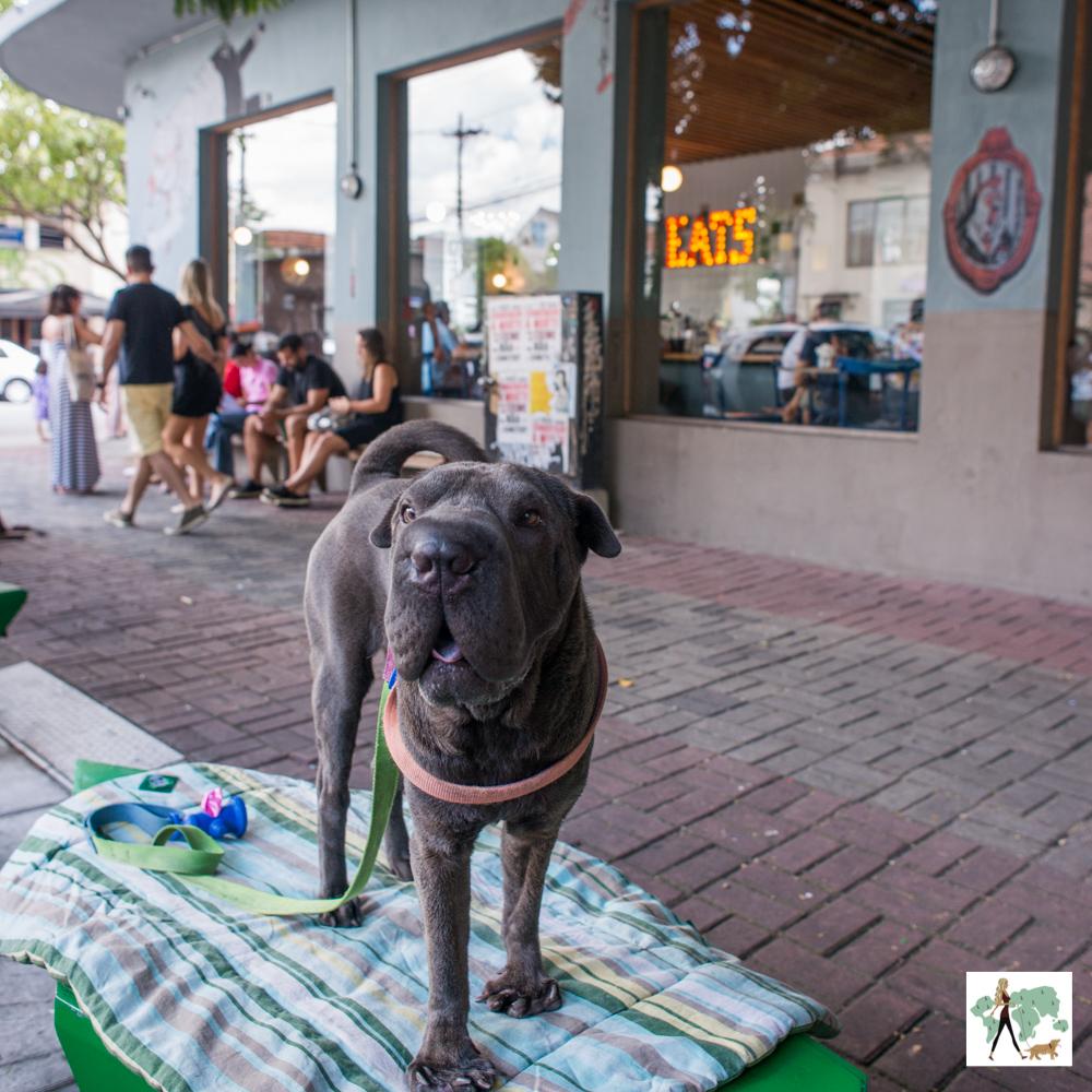 cachorro de pé em frente a hamburgueria