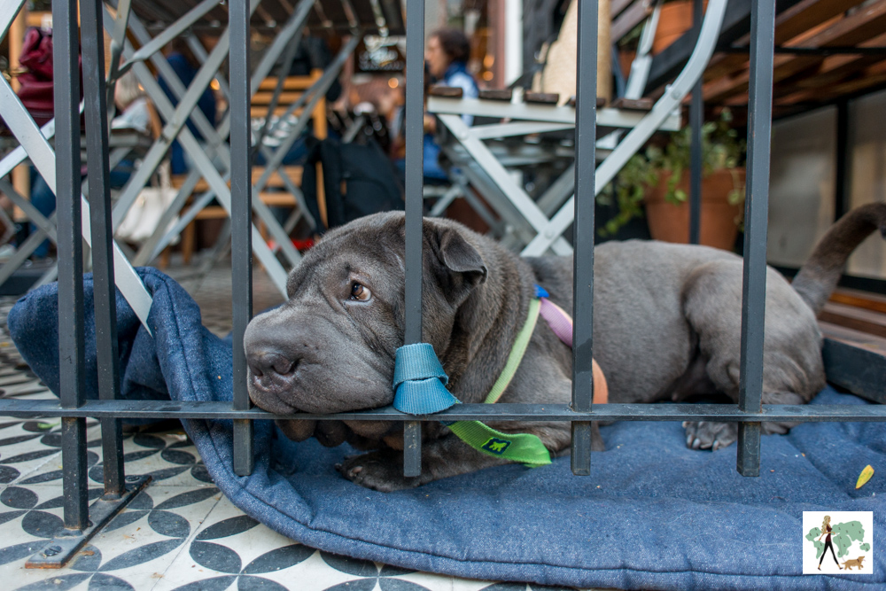 cachorro sentado na almofada atrás da grade