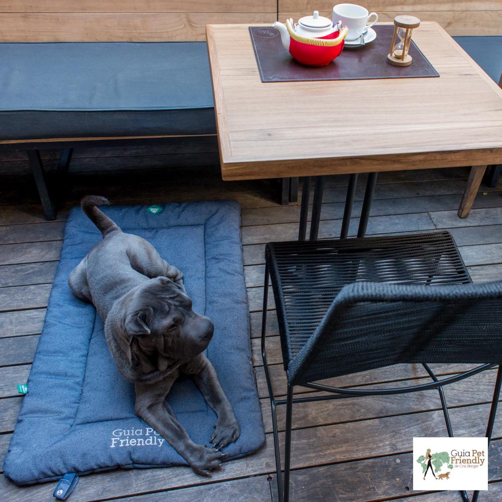 cachorro deitado em restaurante
