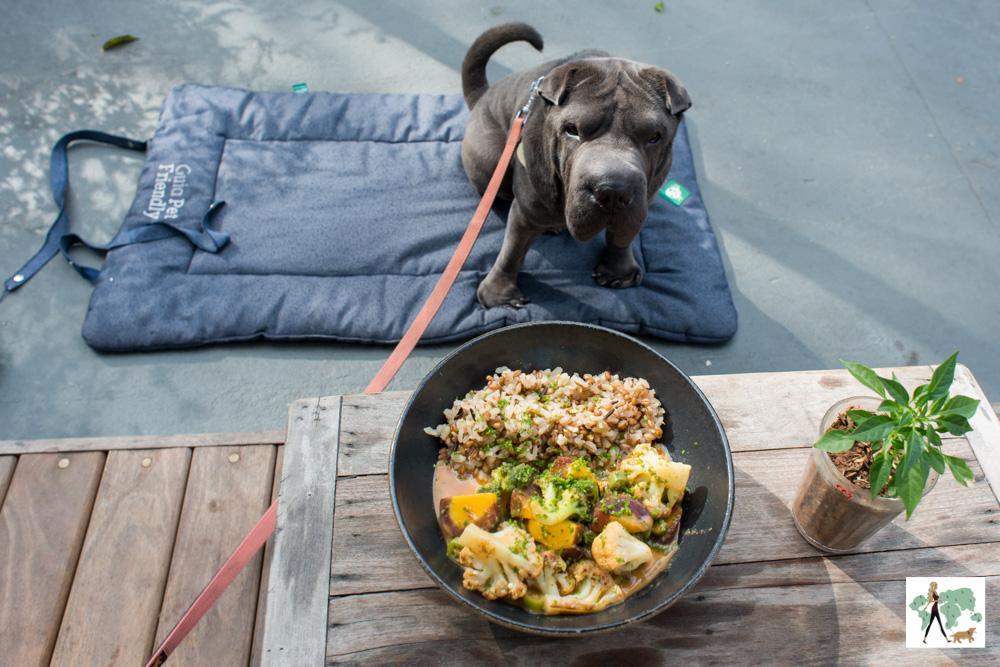 5 lugares pet friendly para comer de joelhos em São Paulo
