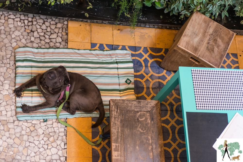 cachorro sentado na varanda