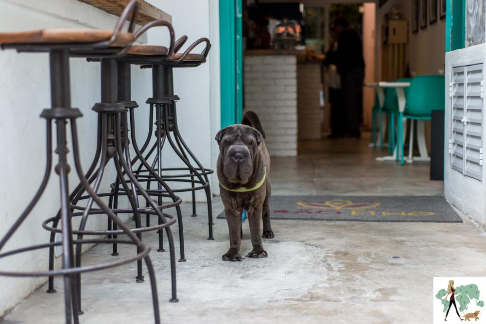 cachorro em pé no restaurante
