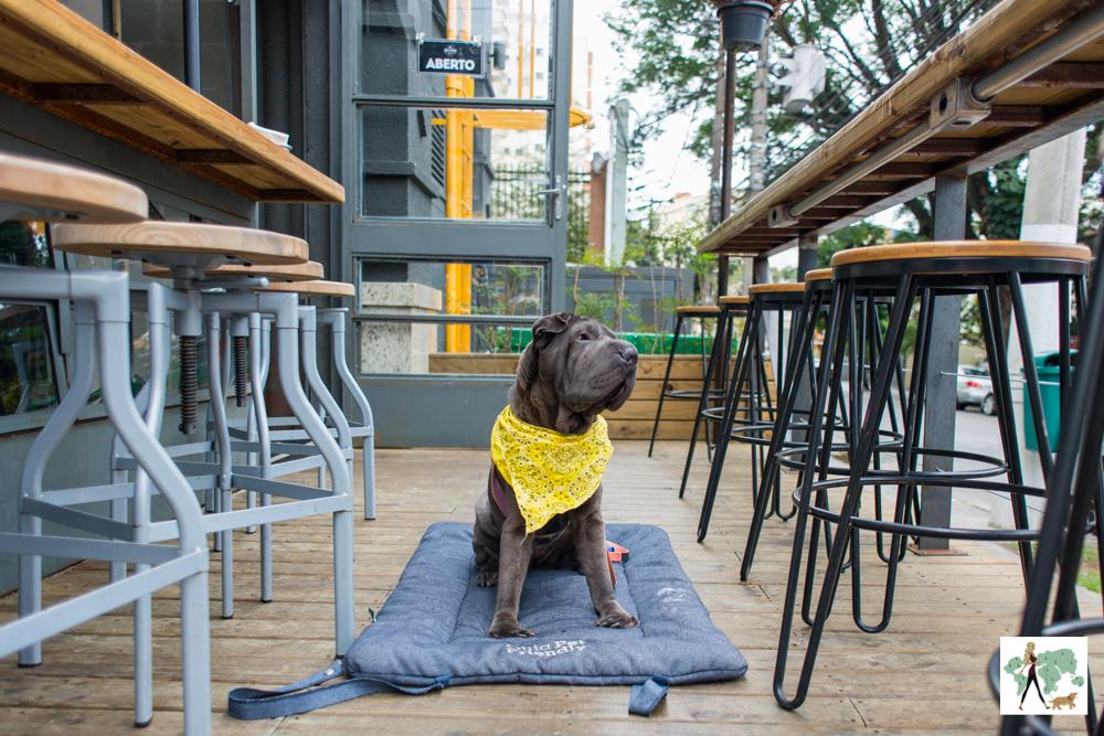 cachorro sentado entre bancos altos