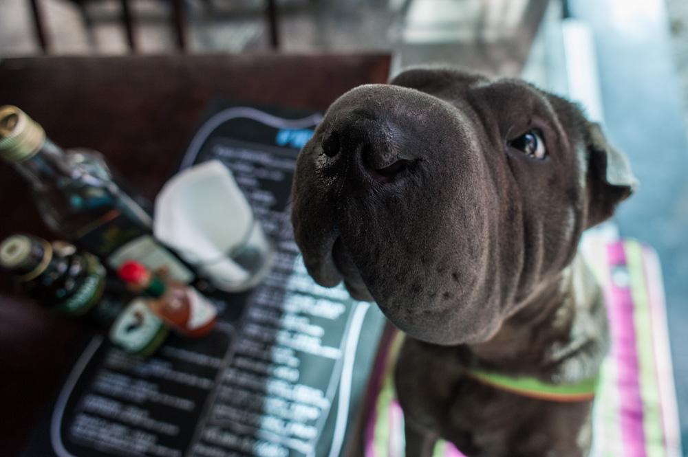 fuço grande de cachorro em bar