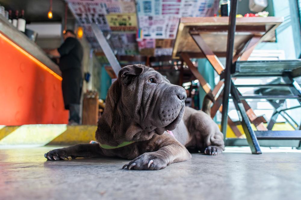 cachorro deitado em chão de bar