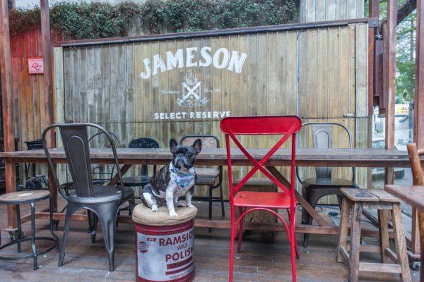 cachorro sentado em cima do banquinho