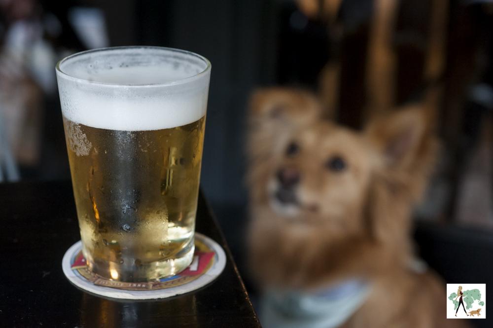 copo de cerveja com cachorro ao fundo