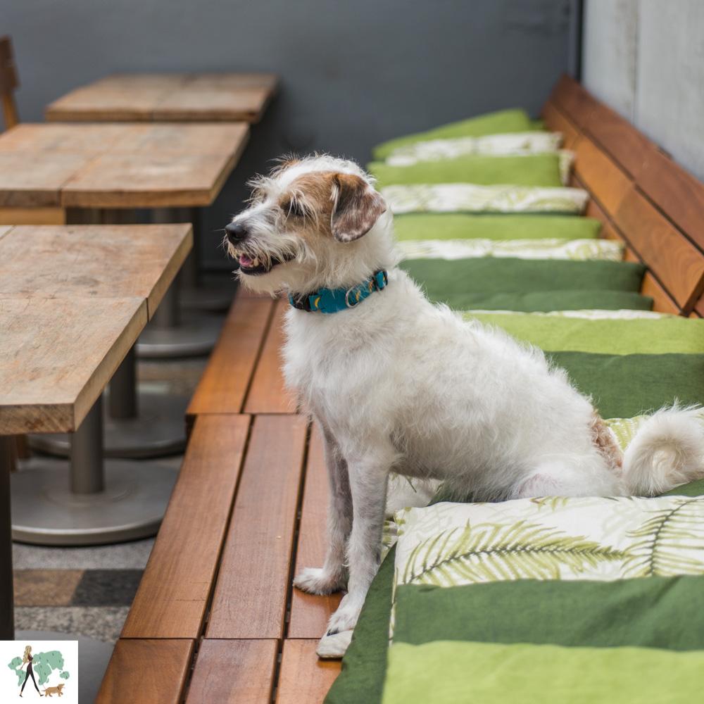 cachorro sentado em sofá