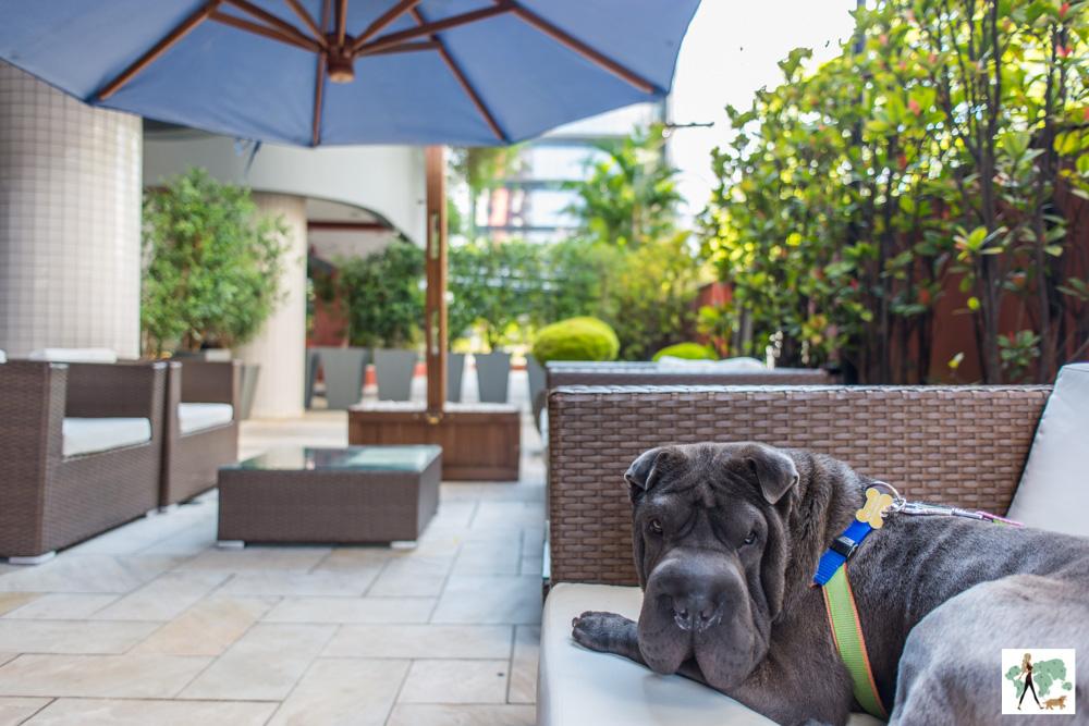 cachorro em cima de sofá em lounge de hotel