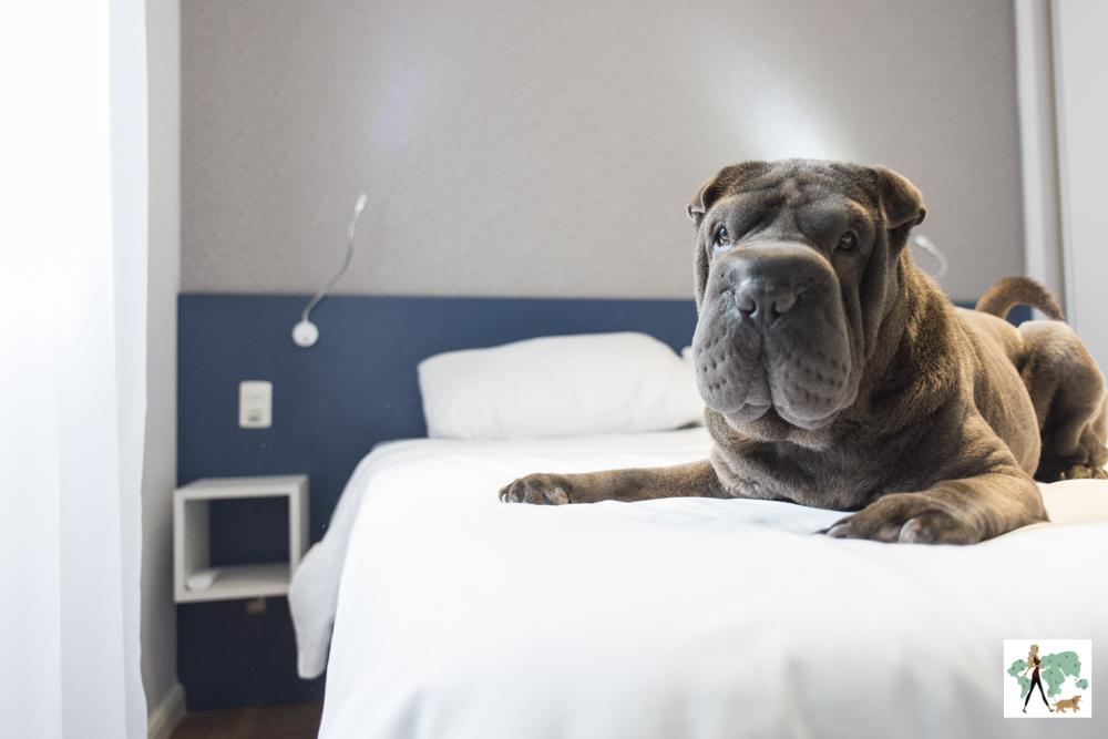 cachorro em cima de cama de hotel