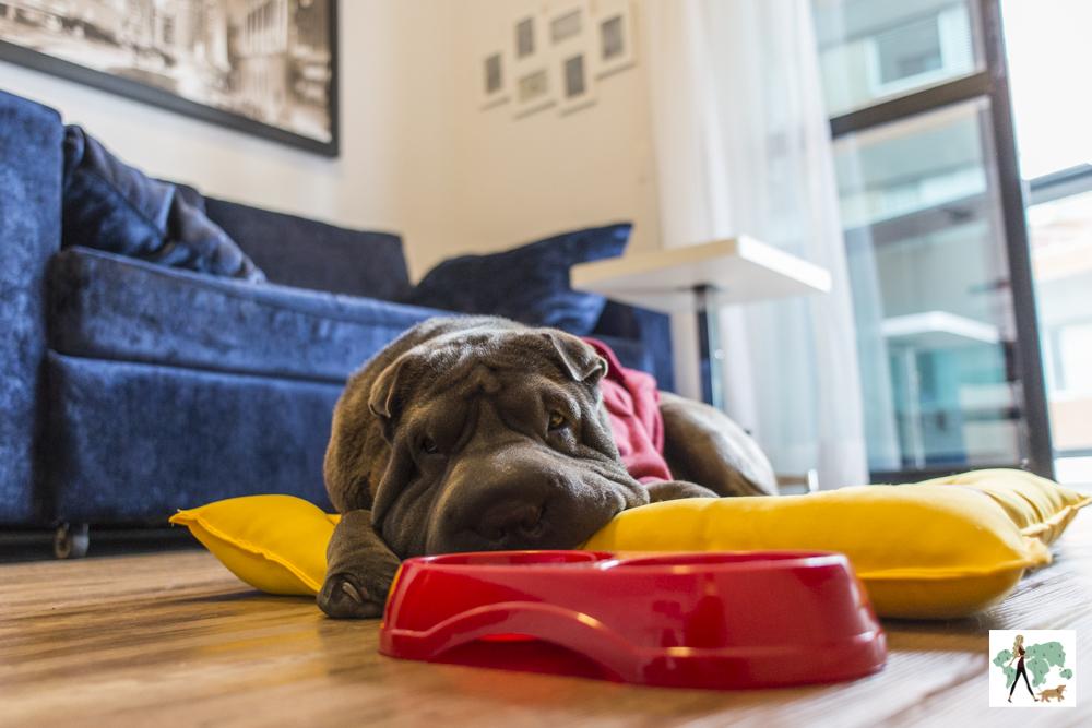 cachorro deitado em cima de almofada com pote de comida ao lado