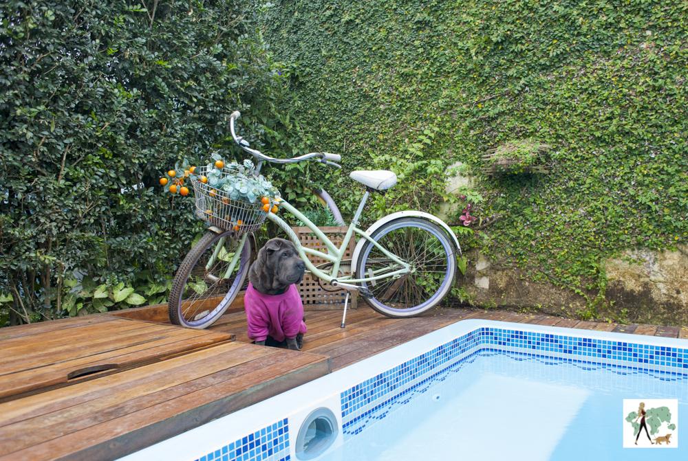 cachorro ao lado de piscina com bicicleta ao fundo