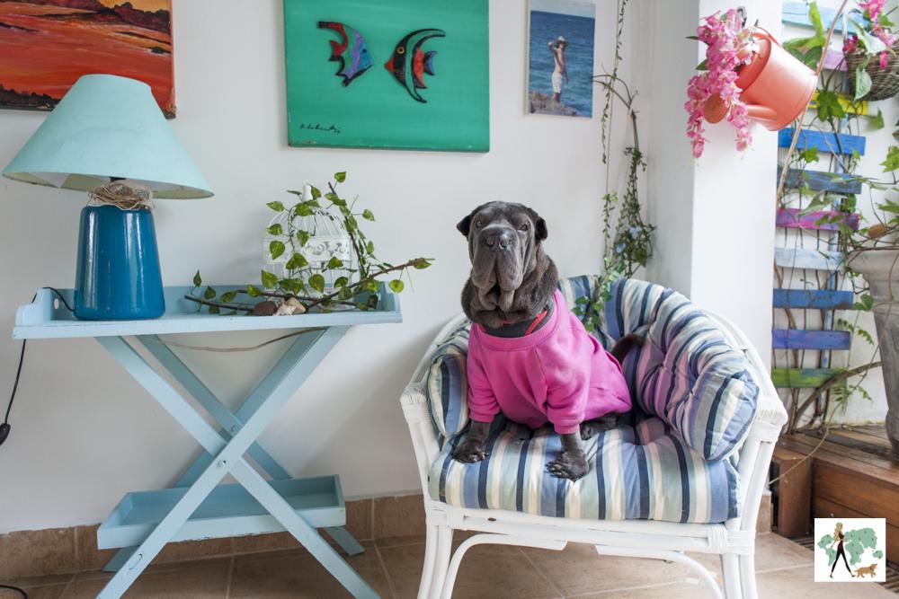 cachorro sentado em cima de poltrona com mesa e abajur ao lado