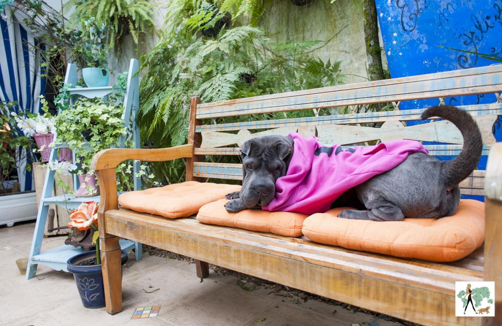 cachorro deitado em cima de banco com almofadas em pousada