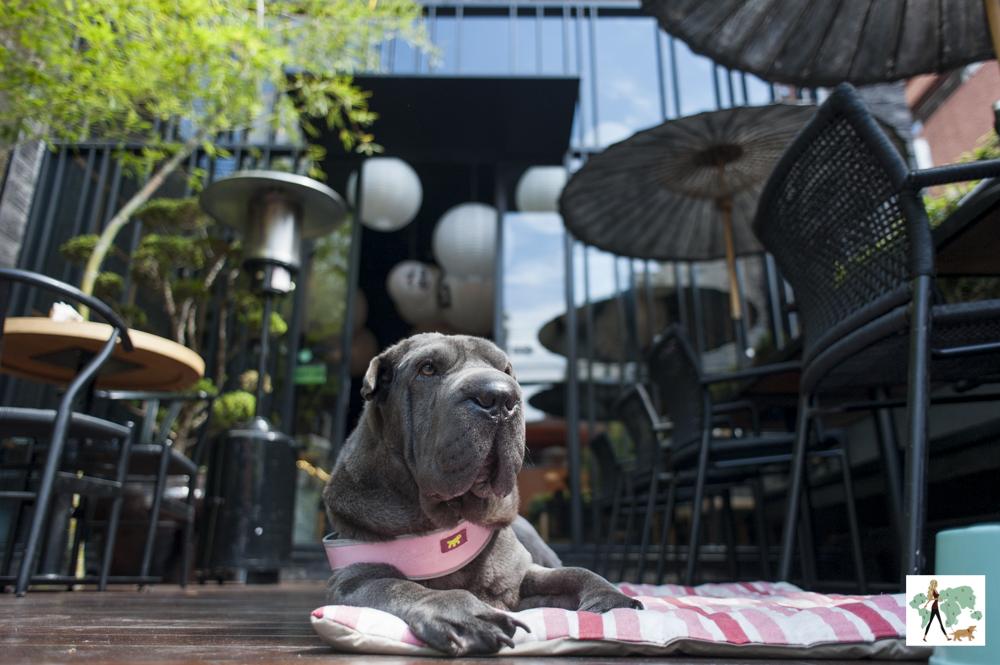 cachorro deitado na entrada de restaurante japaponês