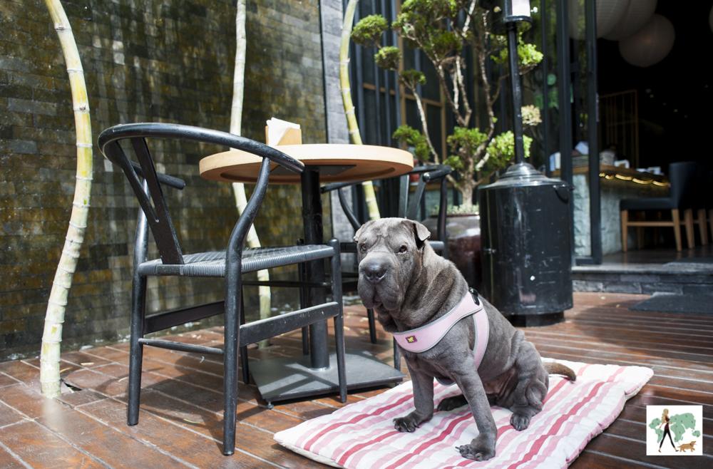 cachorro ao lado de mesa