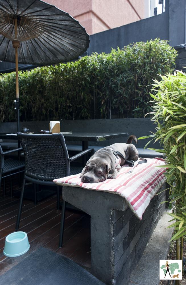 cachorro deitado em cima de mureta em restaurante