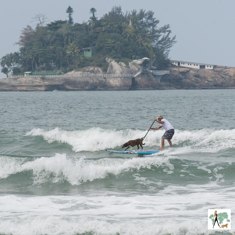 homem e cachorro em cima da prancha de surf no mar