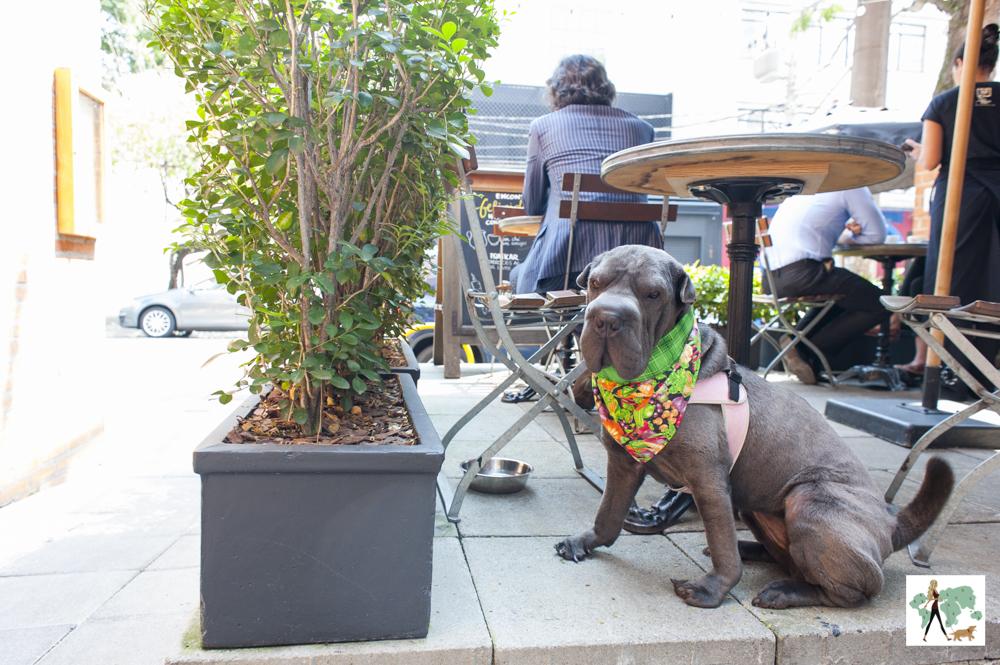 cachorro sentado