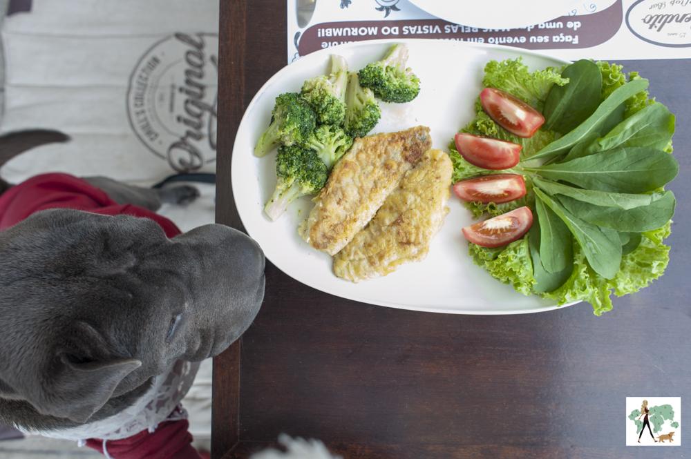 cachorro com prato de salada