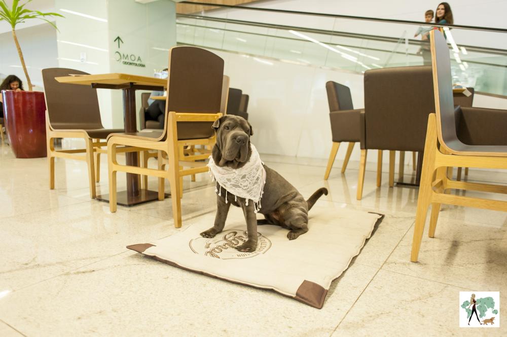 cachorro sentado em café do Morumbi Town
