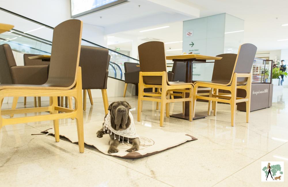 cachorro deitado ao lado de mesas em shopping center