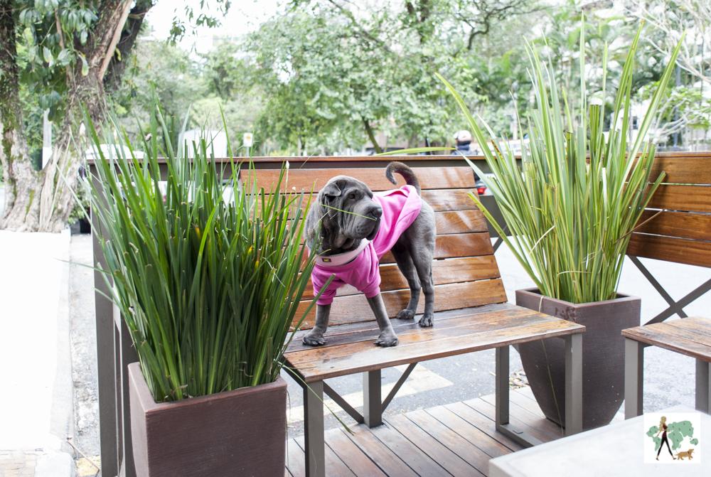 cachorro em cima de banco em parklet