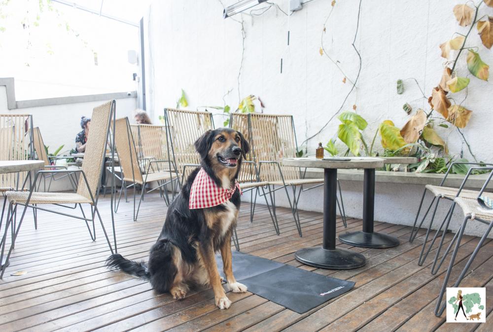 cachorro grande ao lado de mesa em terraço de restaurante