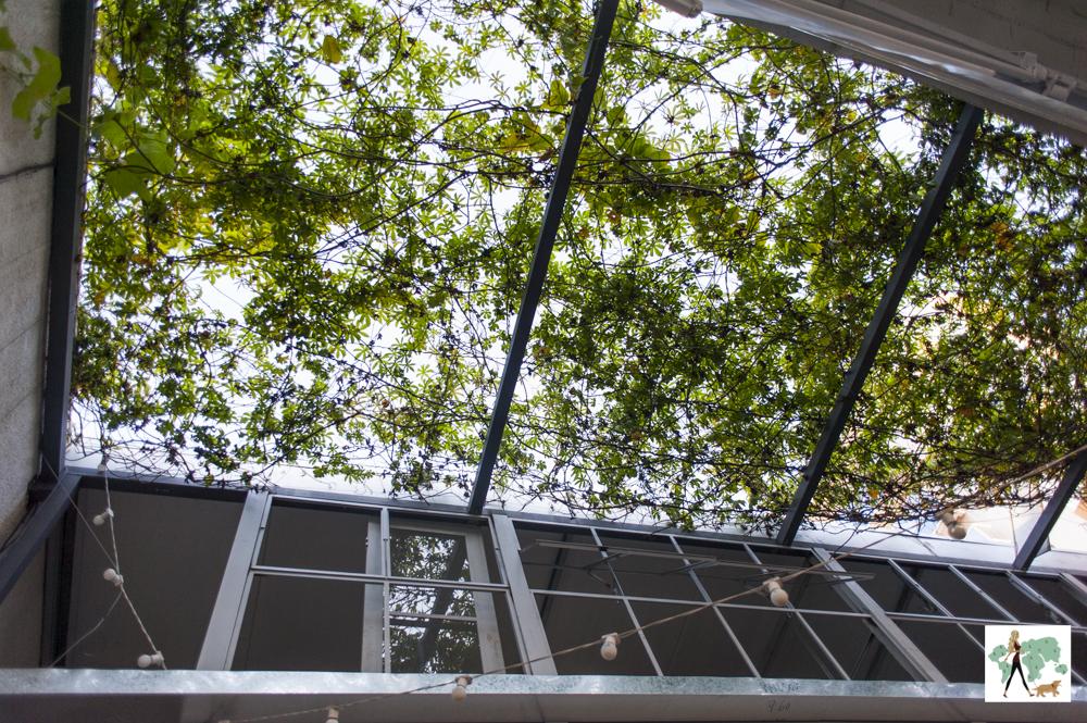 plantas em cima de teto retrátil